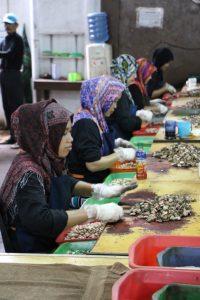 cashewfabrik